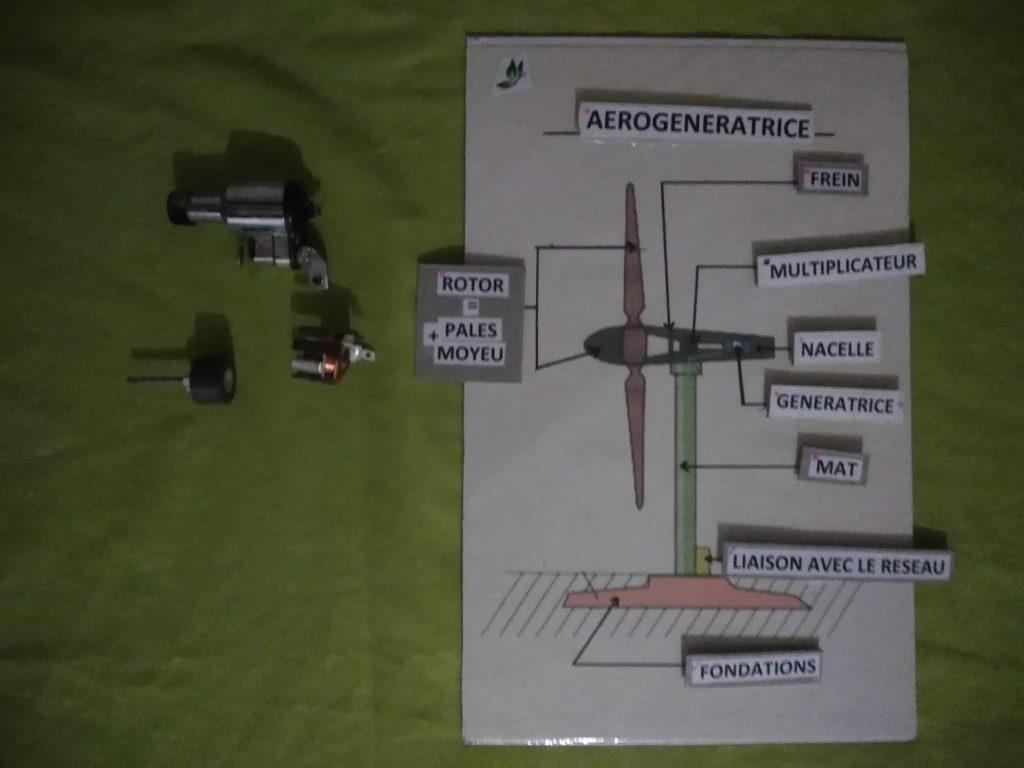 anatomie éolienne
